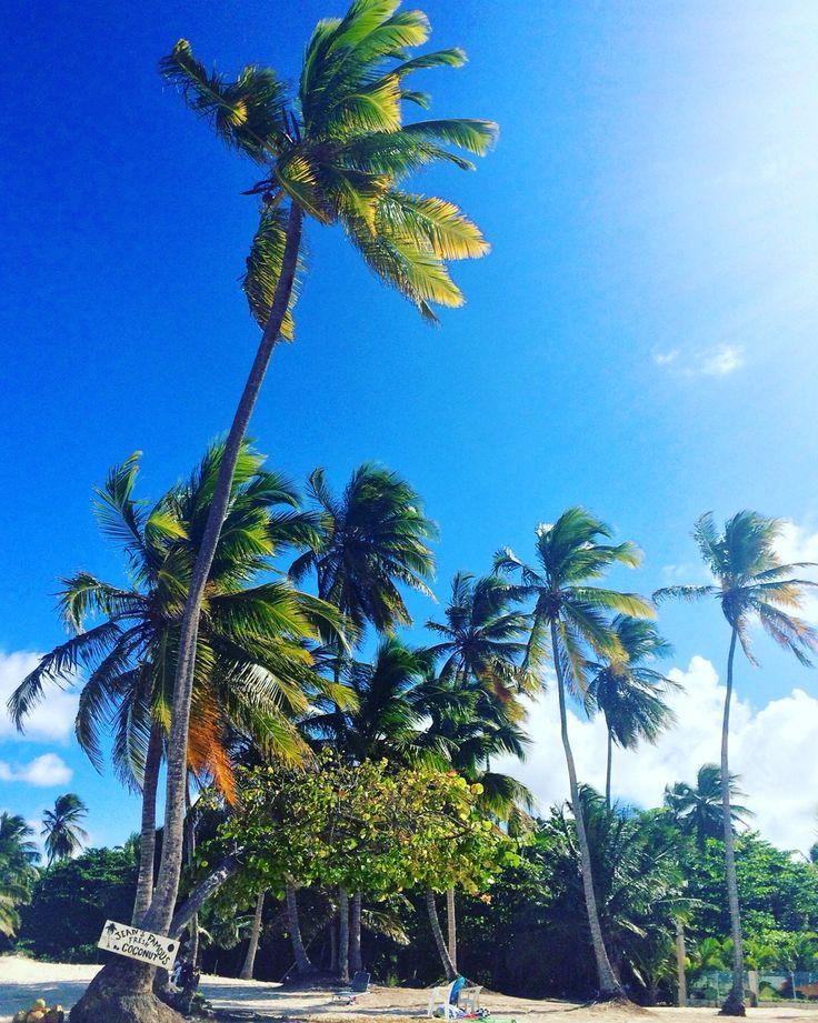 Dominikanische Republik Punta Cana Bavaro