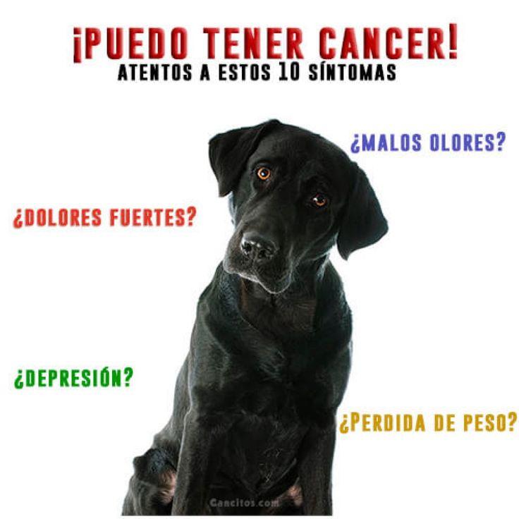 Tu perropuede tener #cancer y no lo sabes, por ello debe estar atento(a) a estas recomendaciones.