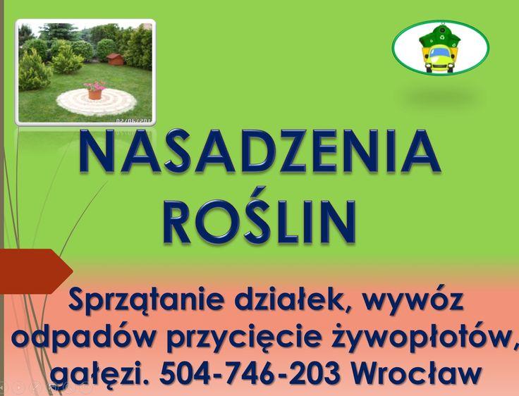 Sadzenie, tui, założenie żywopłotu, cena, tel 504-746-203. Posadzenie roślin, drzew, krzewów ozdobnych.  Usługi ogrodnicze, pielęgnacja ogrodu, prace na działce.