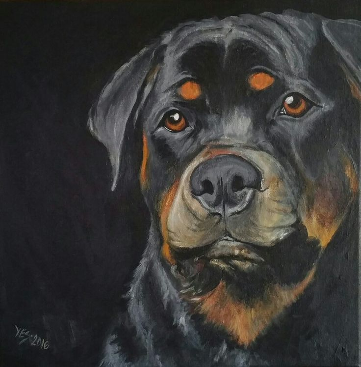 Rottweiler  30x30cm Acrylic on canvas