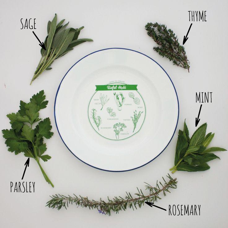 http://tmod.com.au/product/useful-herbs-enamel-plate