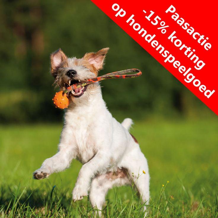 We hebben weer een leuke actie speciaal voor Pasen! Geldig vanaf vandaag, 21-3-2016,19 uur t/m Goede Vrijdag, 25-3-2016, 19 uur!  http://www.quinmo.eu/nl/hond/hondenspeelgoed/