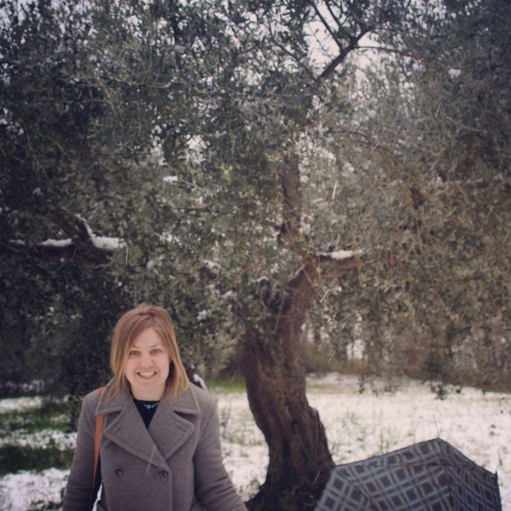 Surprise Easter snow at the Wild Bird Retreat olive grove.  #TerraAdopt #adoptanolivetree
