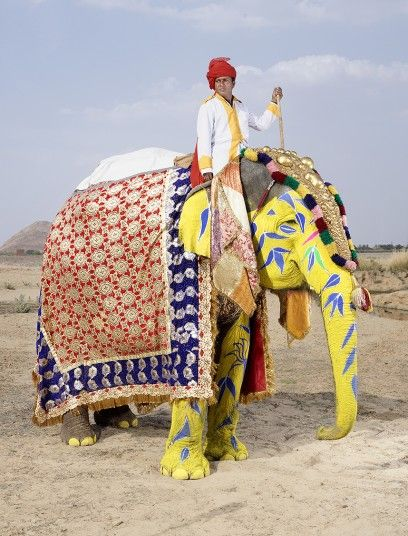 The stars of Jaipur's elephant festival photographed by Charles Fréger - Telegraph