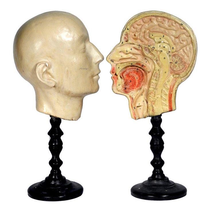 152 best artful anatomy images on Pinterest | Anatomy, Human anatomy ...