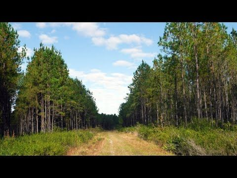 Oak Creek Rural Land for Sale in Bradford County, Florida - http://jacksonvilleflrealestate.co/jax/oak-creek-rural-land-for-sale-in-bradford-county-florida/   Because for real estate investing - Vist! https://youtu.be/kqRVs6Y8-sQ