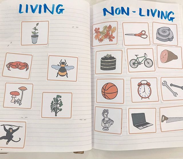 Living And Non Living We Started With A Powerpoint Activity From Twinkl Resources On Understanding The Difference Be Interesting Things Learning Activities