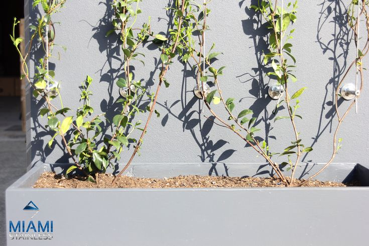 Greenline posts used in green wall vertical garden