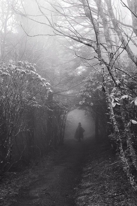 I am a forest, and a night of dark trees: but he who is not afraid of my darkness, will find banks full of roses under my cypresses.      Friedrich Nietzsche