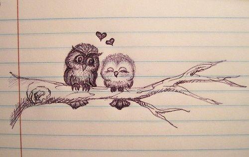 Owl always love