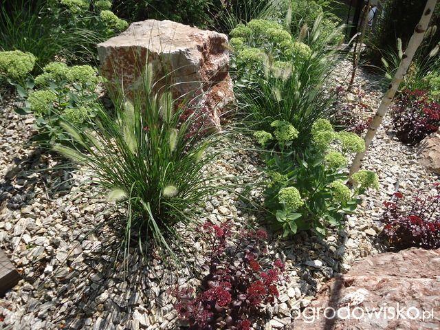 Mój ogród pod górkę... - strona 461 - Forum ogrodnicze - Ogrodowisko