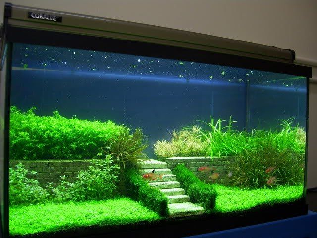 A fun aquascaping design. I think I would put something in the backround such as tree-like plants
