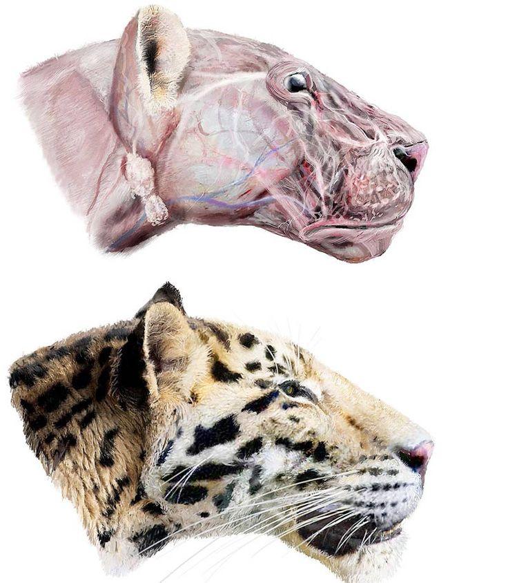 Longdan Tiger, oldest species of tiger ever discovered