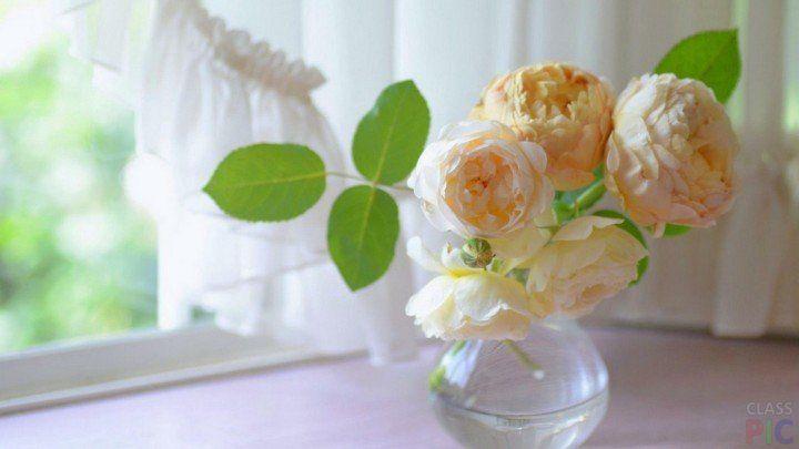 Нежно-персиковые пионы стоят в вазе на окне