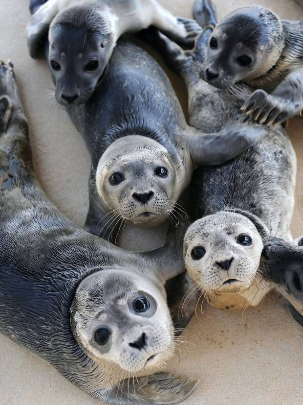 """Offshore wind farms create 'reef effect' perfect for marine wildlife - especially seals - """"Things like barnacles and mussels will settle on hard structures and then that in turn will attract other marine species and it builds up over time."""""""