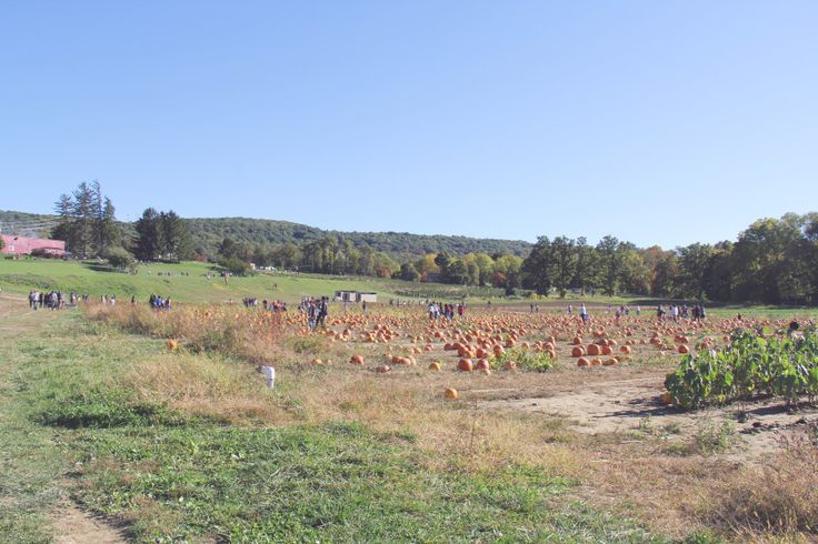 Fishkill Farms #pumpkinpatch #upstatenewyork