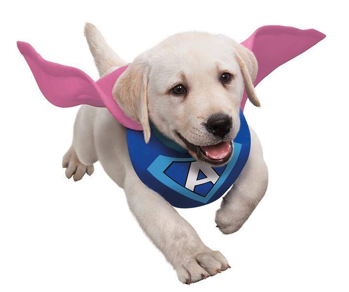 Coucou les copinous!  J'espère que vous avez passé de bonnes fêtes de fin d'annee et surtout que vous commencez bien cette nouvelle année!  De mon côté je commence l'année de la meilleures des manières! I'm back in Paris baby 😂😂  Ce sera à l'occasion des Adaptil Junior Awards! Il paraît même que je serai membre du jury! Je vous donne donc rendez-vous la semaine prochaine pour la première ! En direct live sur FB et IG bien évidement! 😘 #beagle #dogs #cats #necklaces #keychains #anklets…