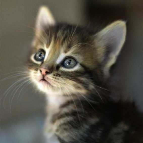 Kittens For Free Kerry It Is Cute Animals Pictures Dog With Kittens For Sale Denver Co Since Kittens Meowing Loop Kittens Kittens Cutest Kittens Cute Animals