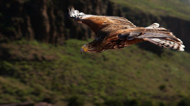 Flight by Hessam M. on 500px