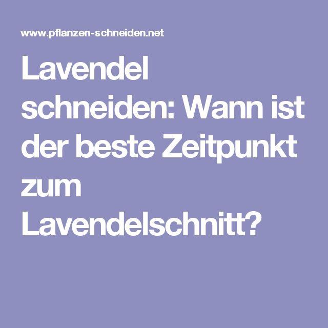 Počet Nápadů Na Téma Lavendel Schneiden Na Pinterestu: 17 ... Lavendel Pflanzen Tipps Pflege