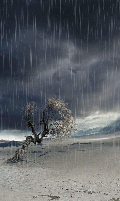Download Animated 480x800 «Lonely tree» Cell Phone