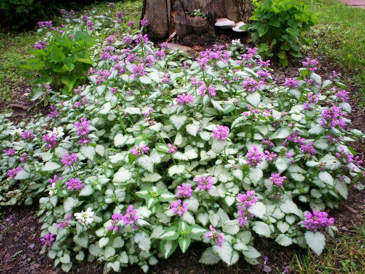 267 best arrangement ext rieur de fleurs images on for Weed plantation exterieur
