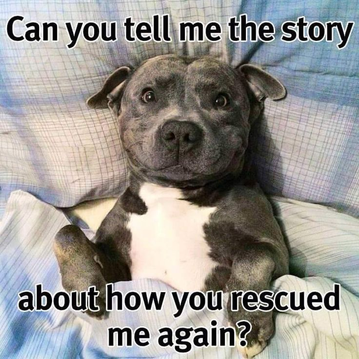 I make my husband tell me the story of how we got our rescue allllll of the time. (Yes, like a child. HA!)
