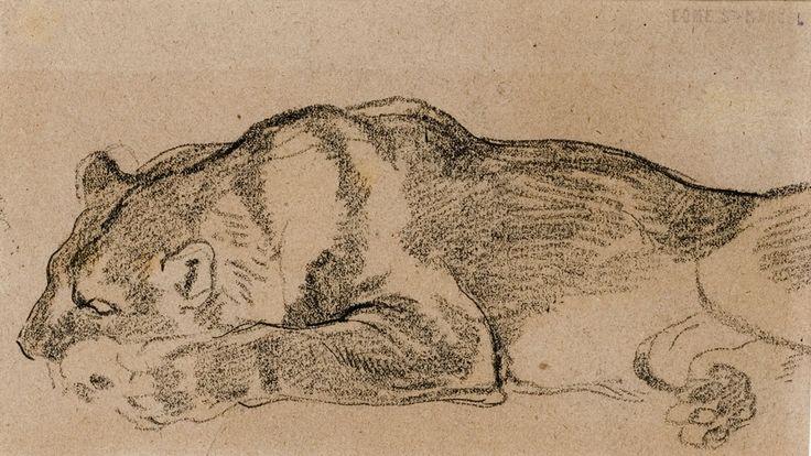 Edmé Saint-Marcel, Étude de lion, Dessin, © MuMa Le Havre / Charles Maslard