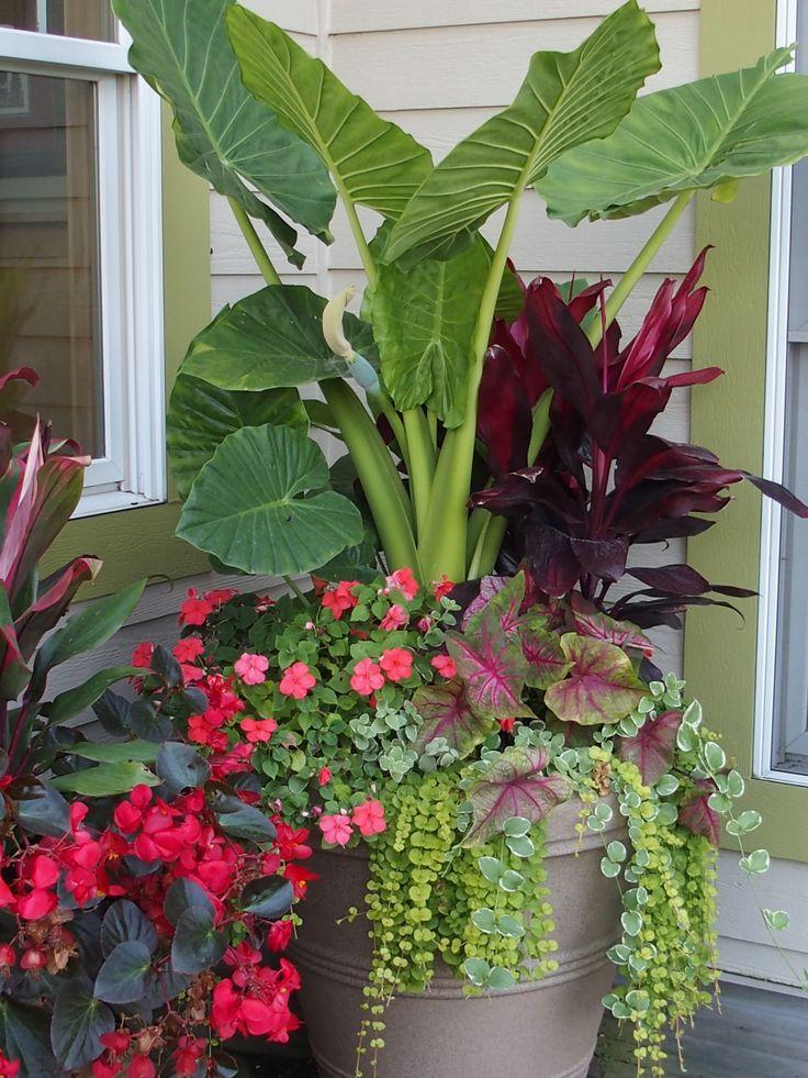 Summer Annual Flowers Planter Alocasia, Dragon Wing Begonia, Lysamachia, Caladium, Impatiens. Garden Design. www.sarahscottagecreations.com