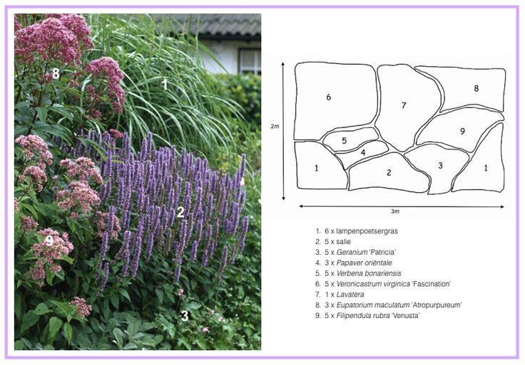 Purple Hues Border ................... 1. Chinese Fountaingrass (Pennisetum alopecuroides)  2. Woodland Sage 'Blauhügel' (aka 'Blue Hill') (Salvia nemorosa)  3. Cranesbill Geranium 'Patricia'  4. Oriental Poppy 'Patty's Plum'  5. Tall Verbena (Verbena bonariensis)  6. Culver's Root 'Fascination' (Veronicastrum virginicum)  7. Tree Mallow 'Barnsley' (Lavatera x clement)  8. Spotted Joe Pye Weed 'Atropurpureum' (Eupatorium maculatum)  9. Queen of the Prairie 'Venusta' (Filipendula rubra)