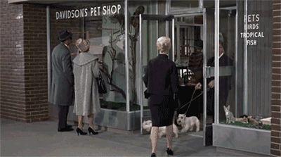 Classic Hitchcock : The Birds (Les Oiseaux - 1952)
