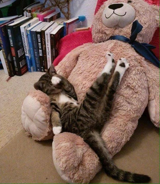My two favorite things!!  Cats & bears!!!