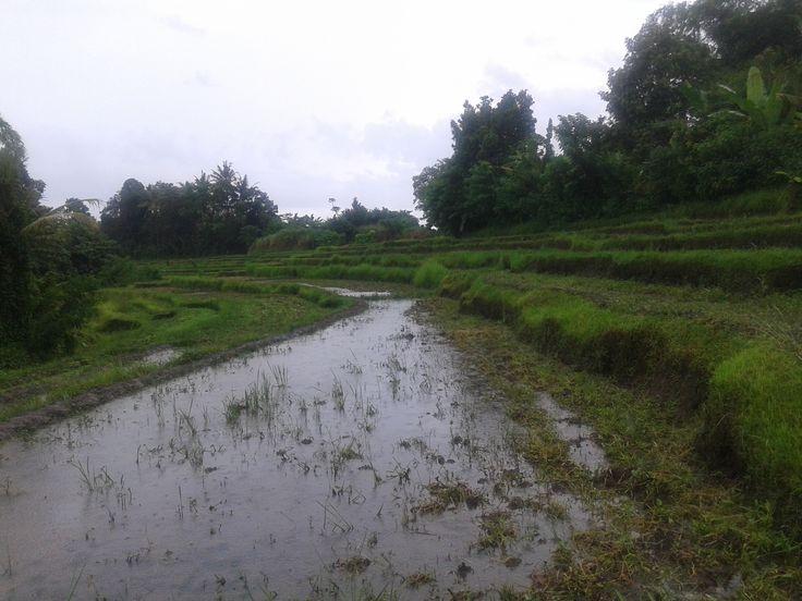 Dijual tanah sawah produktif luas 19 are, harga 50 juta per are Lokasi : Kota Kediri - Tabanan, Bali