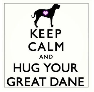 Great Dane love. ;) even if he is in distroyer phase