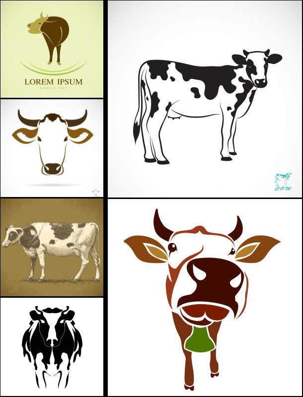 Set of 6 #vector cow #illustrations and backgrounds in different styles. Close-up and full size images of cows for your vector designs