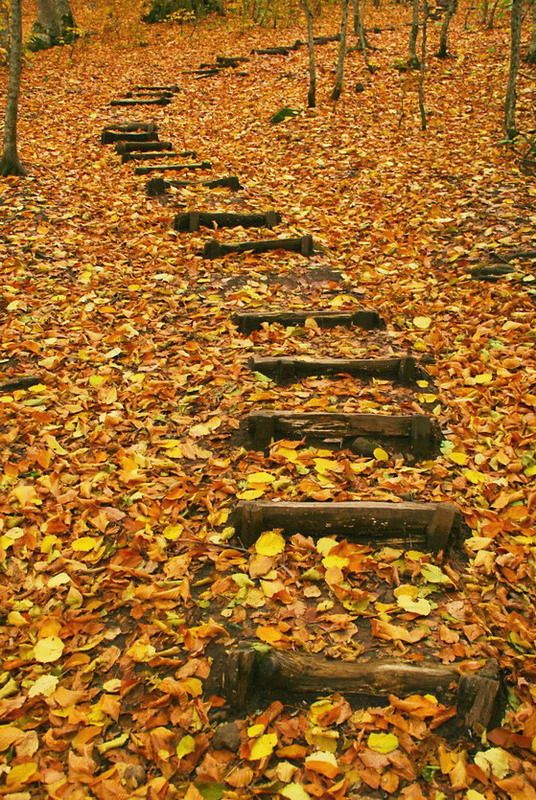 Autumn  path - Seven lakes,Bolu,Turkey