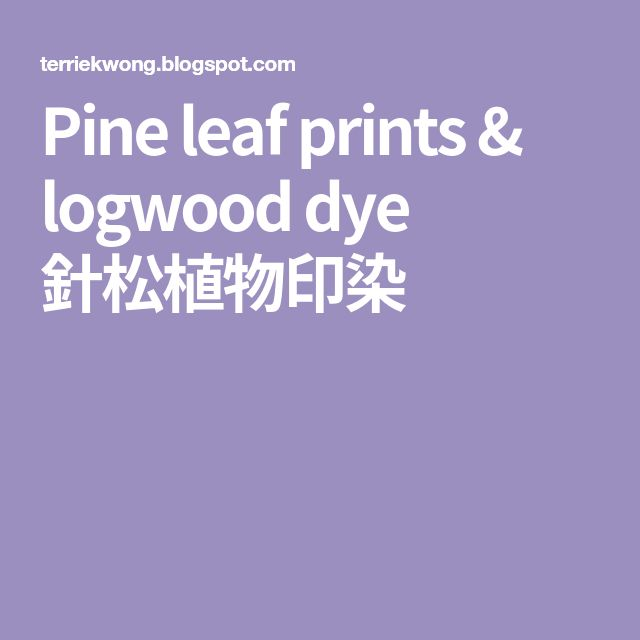 Pine leaf prints & logwood dye 針松植物印染