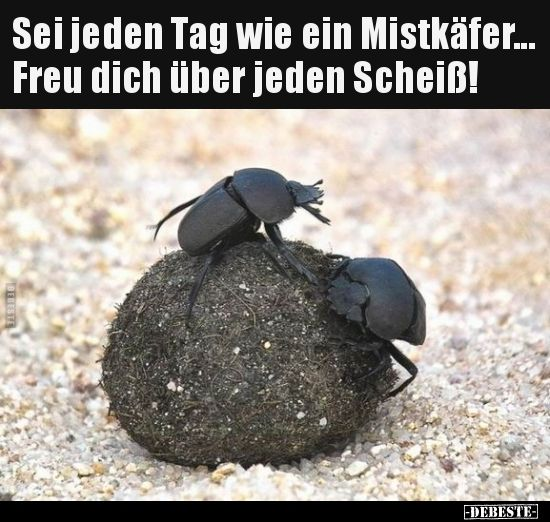 Be like a dung beetle every day … rejoice …