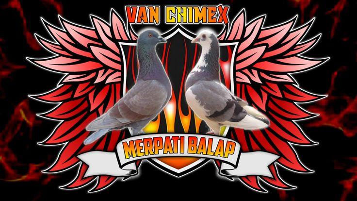 Logo Merpati Pigeon Design Bird Pigeon Logo Pigeon Bird Bird Logos