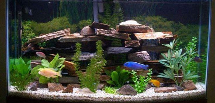 cool fish tanks | modern style fish tank design decoration ideas: cool fish tank ...