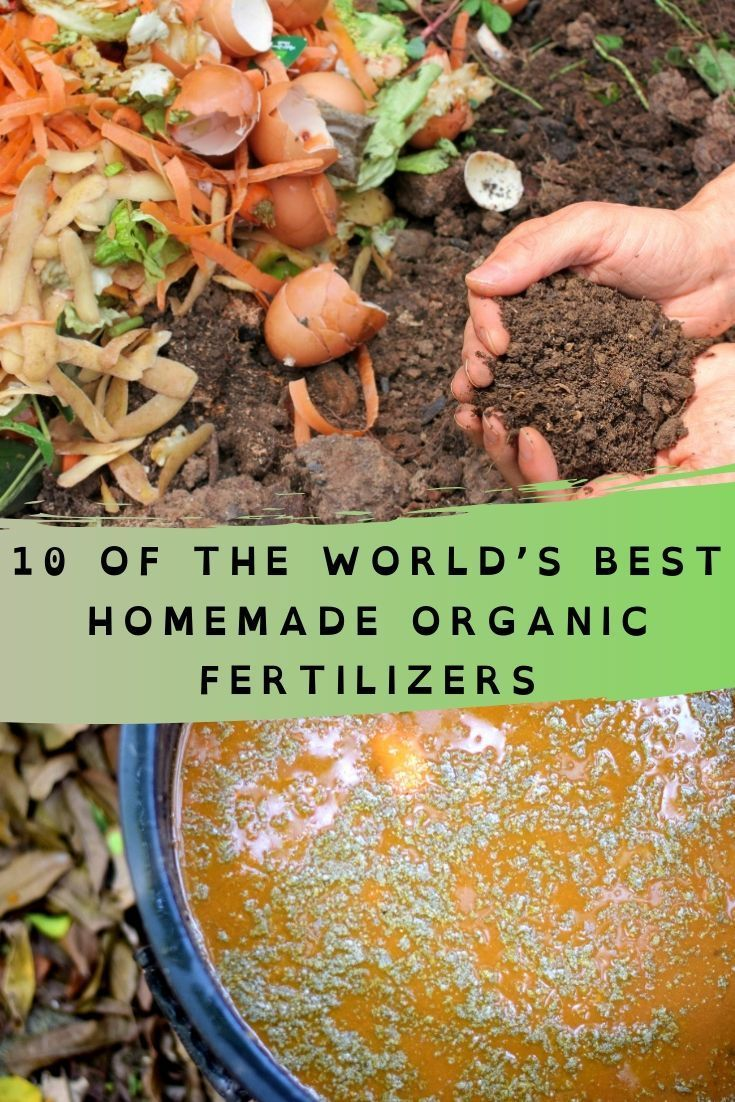 10 Of The World S Best Homemade Organic Fertilizers Organic Fertilizer Organic Vegetables Fertilizer For Plants