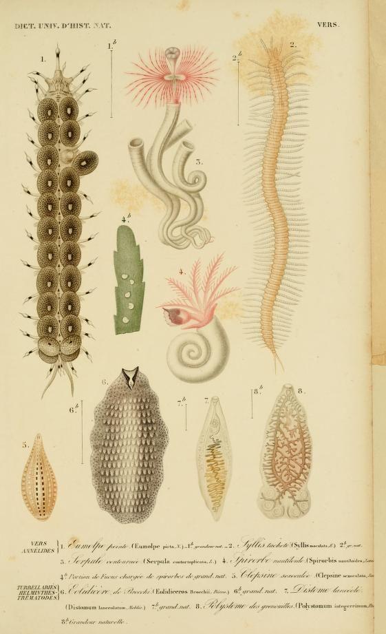 v. 3 1849 - Atlas (Zoologie-Botanique) - Dictionnaire universel d'histoire naturelle : - Biodiversity Heritage Library