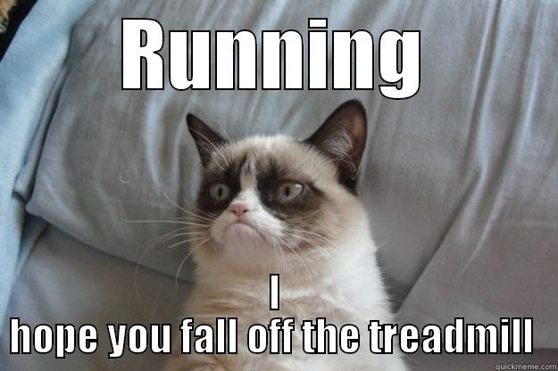 #GrumpyCat #meme For more Grumpy Cat quote, humor and meme visit www.pinterest.com/erikakaisersot