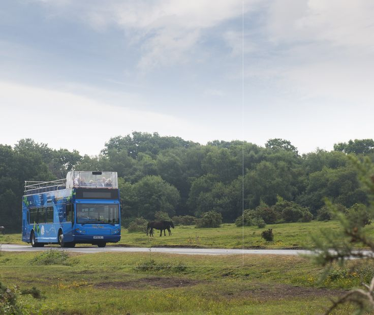An exciting trip on the blue route bus of the New Forest Tour passes by some horses.