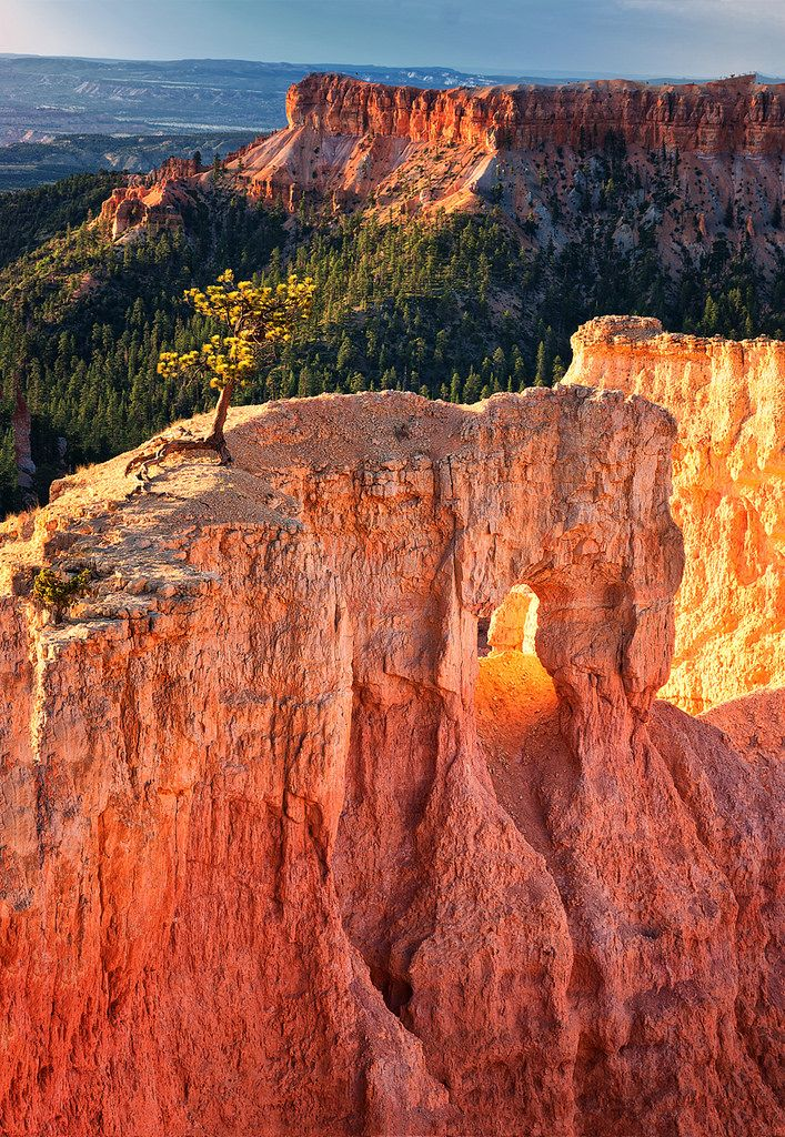 view from Sunrise Point at dawn - Bryce Canyon National Park
