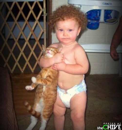 """Give me the toy or the cat gets it!""Little Children, Funny Image, Funny Pics, Animal Humor, Funny Pictures, Funny Quotes, Funny Photos, Funny Animal, Funny Kids"