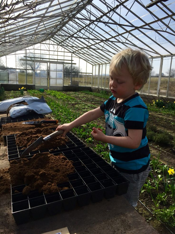 Organic flower farming, slowflowers, vildevioler.dk, March 2016