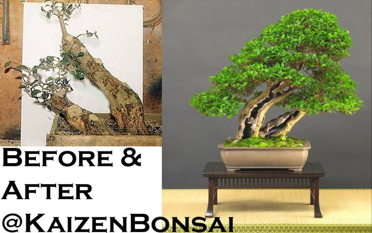 From rags to riches @KaizenBonsai
