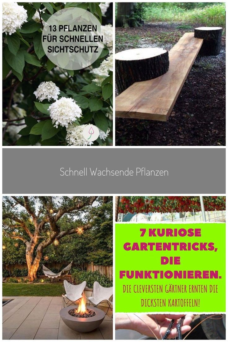Naturnahen Garten Mit Sichtschutz Aus Pflanzen Gestalten