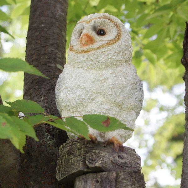 白ふくろうのガーデンオーナメント (ふくろうのソフィー) (置物 オーナメント 庭 かわいい 動物 オブジェ)|niwazakka